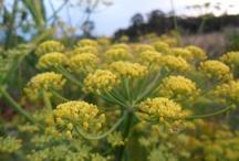 Plan a Garden: Herbs