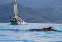 Airlie Beach tours and things to do