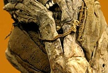 mummipain