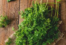 Herbs / A celebration of plants used for food, flavoring and medicine!