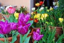 """Terrazzi in fiore / E' online la gallery con le meravigliose foto del contest in collaborazione con alfemminile.com """"Terrazzi in Fiore!"""""""