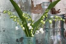Convallaria – Lily of valley – Gyöngyvirág