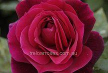 Front rose border