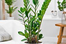 piante per casa