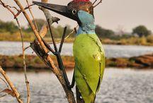 Kunsthandwerk aus Zimbabwe / Dekoratives für den Garten aus Metall, Treibholz und Stein