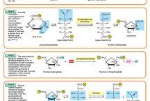 School Biochemistry