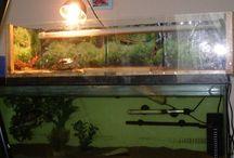 Turtle tank ideas and set ups