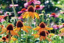 Gardening / by Susan Keferl