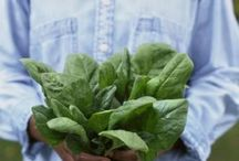 Hage  / Gardening, outdoors, flowers, hage, utendørs, blomster, tips og triks