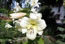 Moje zahradka / photo