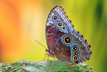Natuur fotografie / The top 10 most beautiful nature wall art pictures
