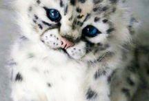 BIG CATS !!!1