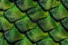 Icono Green