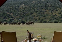 Safari Tent Inspiration