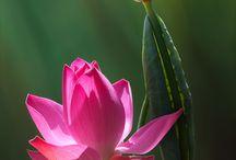 Цветы трава