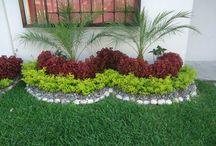 Zahrada - květiny