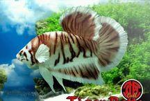 Dream Fish etc. [freshwater]