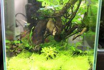 my stuff / Мои аквариумы, флорариумы, прочие самоделки и просто симпатичные штуки
