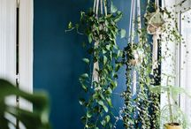 Dream Home - Indoor Gardening