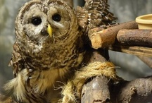 I Luv Owls / by Christine Numainville