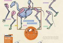 Anatomia Animais