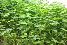 The Best Way To Enjoy Fresh Greens | Urban Cultivator