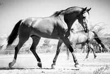 Gorgeous equines