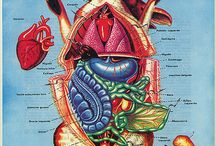 Dr Monto's Educational and Anatomy Board