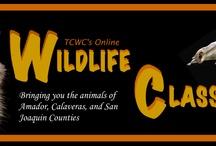 WildlifeClassroom.org