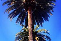 Calilove / California