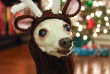 crochet pet