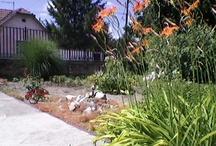 Garden in my home is beautiful