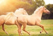 I wish I was a cowgirl