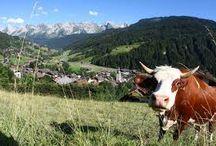 Savoie / Savoyard