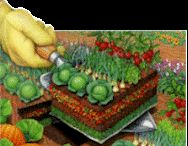 gardening / by DeVonna Nascimento