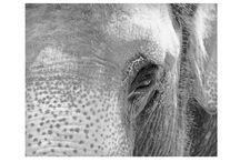 Elephants / Elephants, Animals, Inspiration, Curiosities, h-a-l-e.com