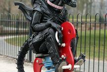 Alien et Predator