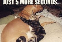 We all love Cats / Some amazing cat pictures from our Facebook Page
