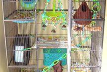 Cage ideas / by Rachel Bailey