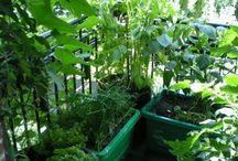 Garden on the balcony
