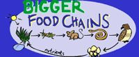 Science-Food Chains / by Jenniffer Pope