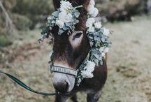 Animals wearing flowers