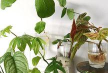 Gardening: propagating