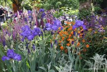 Vibrant and Colourful Planting and Cheerful, Colourful Gardens / Colourful gardens and examples of vibrant planting.