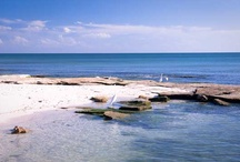 Siesta Key, Florida Margo Love Story, Realtor / Siesta Key Beach, rated #1 in Country and one of the top 20 in the World!