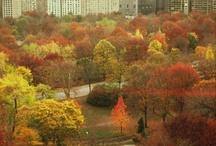 NEW YORK, NEW YORK / by Dotty Vinson
