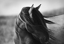 For the Love of Horses / by Katie K
