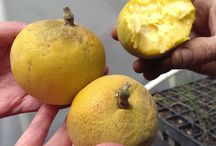 Rare and exotic / All kinds of weird and wonderful fruits and vegetables!