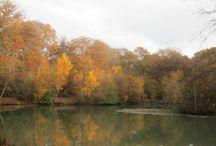 Chilstone Showgarden through the seasons