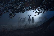 Safari & vision de nuit